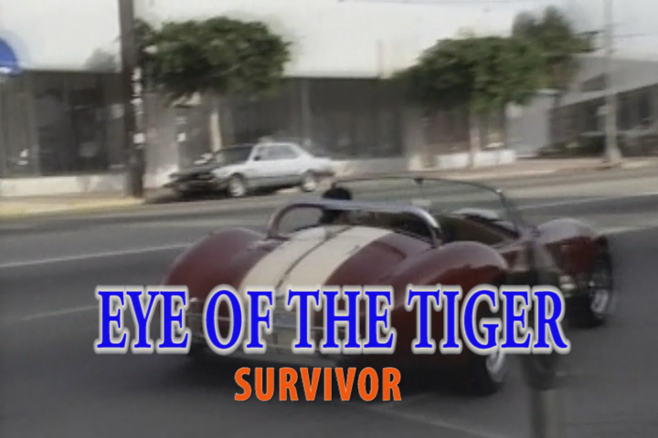 Read more about the article EYE OF THE TIGER