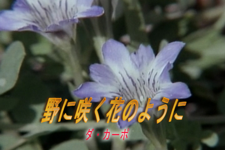 Read more about the article 野に咲く花のように